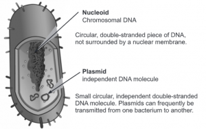 Plasmid, its Types and function