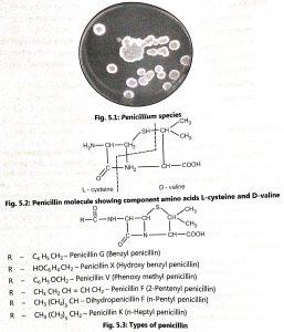 Production of Penicillin
