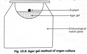 Methods of Organ culture
