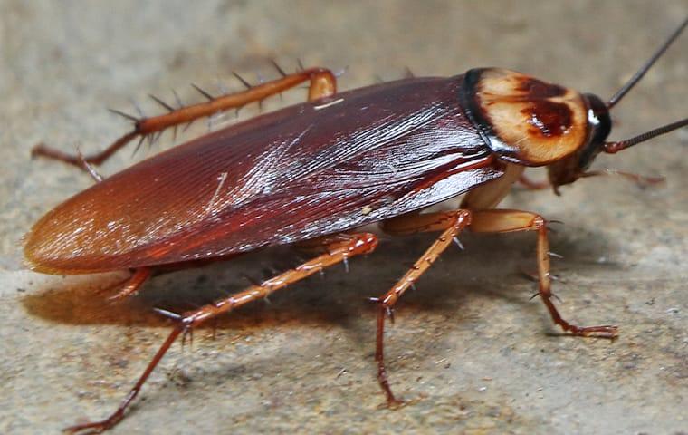 Cockroach Quiz