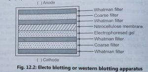 Blotting Technique Types