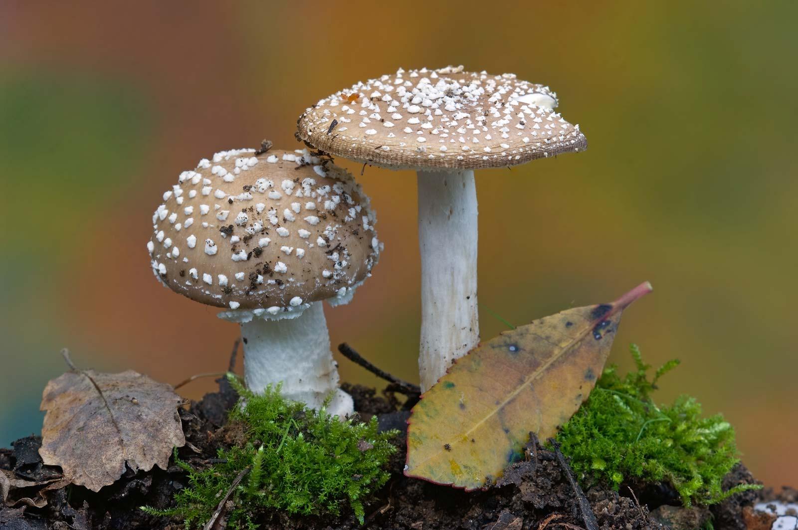 Biological Classification: Fungi Quiz