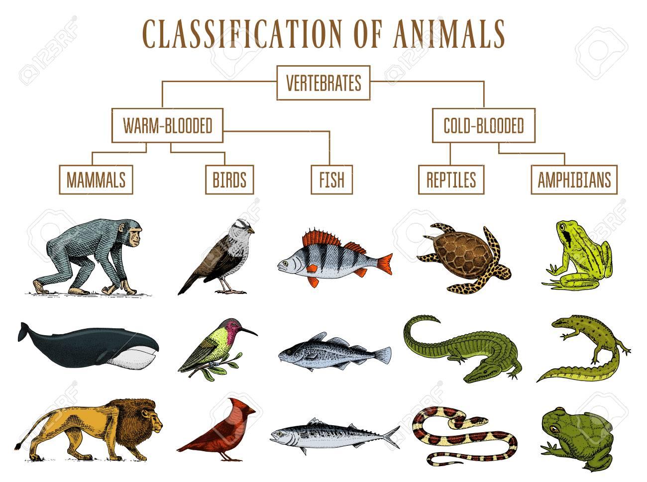 Animal Kingdom Quiz No.4