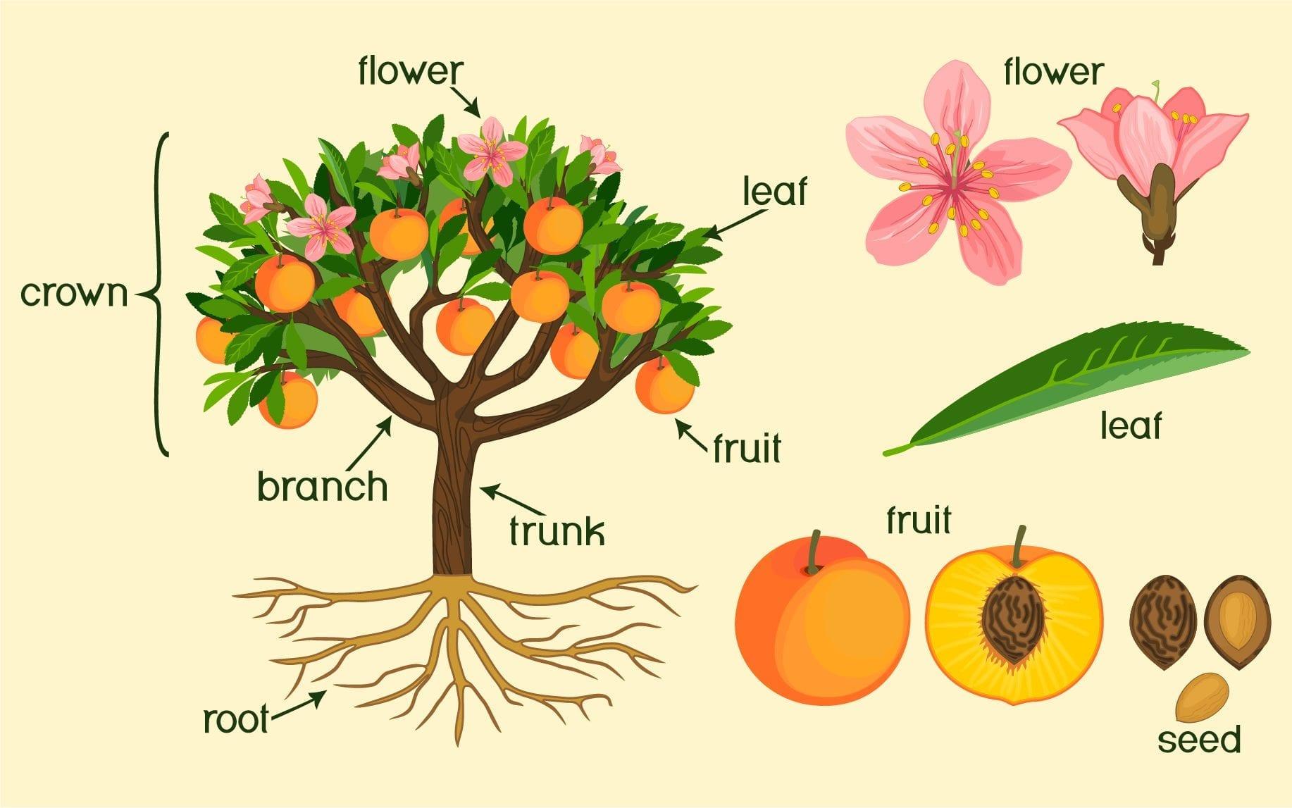 Morphology of Flowering Plants Part 1 Quiz