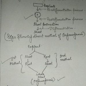 Organogenesis- Overview
