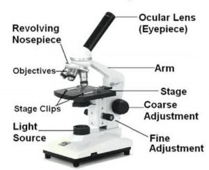 Microscopy and Its Types
