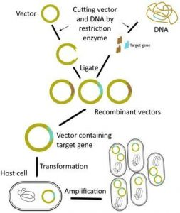 Study Notes on Biotechnology Principles and Processes