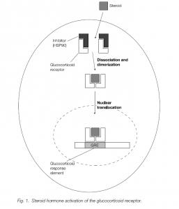 Examples Of Transcriptional Regulation