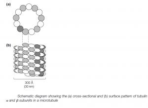 Large Macromolecular Assemblies