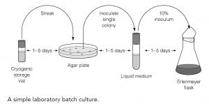Batch culture in the laboratory
