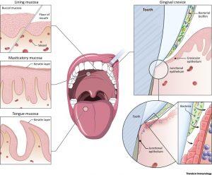 Non-Specific Defensive Factors of Oral Cavity