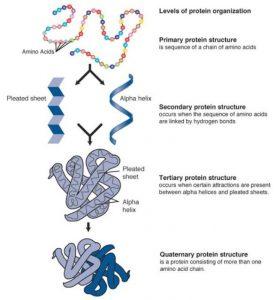 Denaturation of Macromolecules
