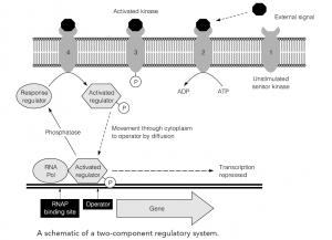Signal transduction and environmental sensing