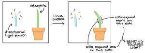 Study Notes on Plant Growth and Development
