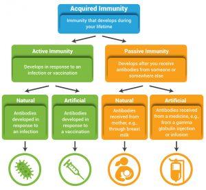 Immunity and Types of Immune Response