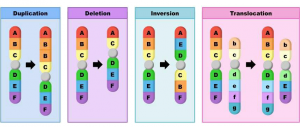 Chromosome structure mutations divided into two parts one is structural and another one is numerical. The structural mutation
