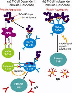 T-cell Immune Responses
