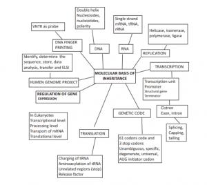 Study Notes on Molecular Basis of Inheritance