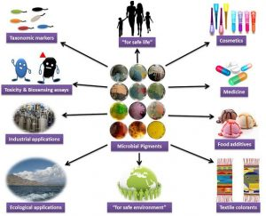 Production of Pigments by Microorganisms