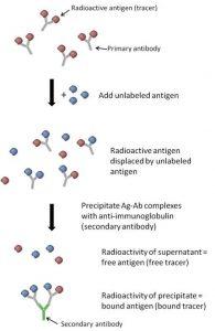 Radioimmunoassay (RIA)