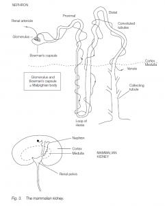 Nitrogenous Excretion