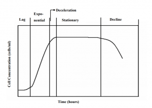 Phases of Culture Growth during Fermentation
