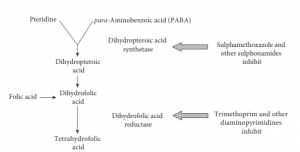 Synthetic antimicrobial agents