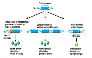 Oncogenes,Proto-Oncogenes and Retroviral Oncogenes