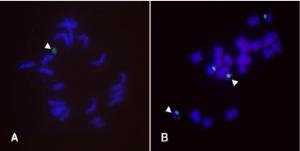 Mini chromosomes