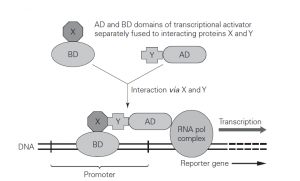 Proteomics: An Overview