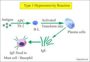 Hypersensitivities, Autoimmunity and Immunization