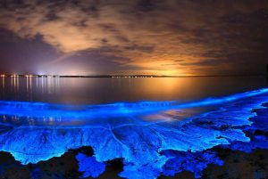 What causes bioluminescence in the ocean