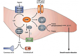 Major pathways of Intracellular Cell Signalling