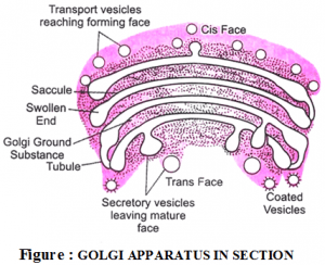 Golgi Complex and its function