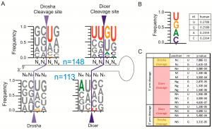 Micro-RNA (miRNA): Biogenesis & Function