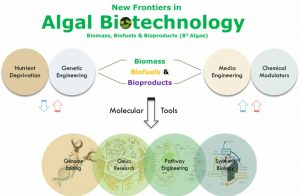 Recent developments and future of algal biotechnology