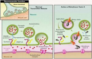 ALGAL TOXIN- OVERVIEW