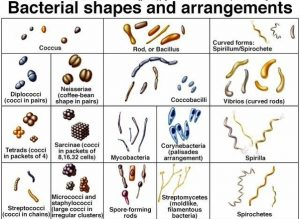 BACTERIA -OVERVIEW