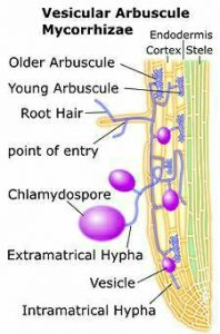 Mycorrhiza| Overview