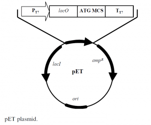 pET and pBAD expression systems