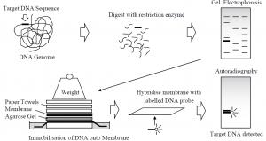 Nucleic Acid Analysis Methods