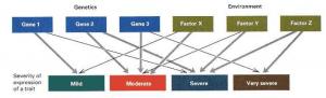 How Genes Determine Traits?