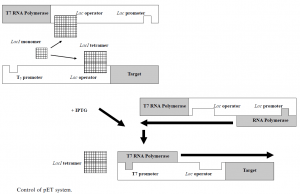 pET and pBAD expression system