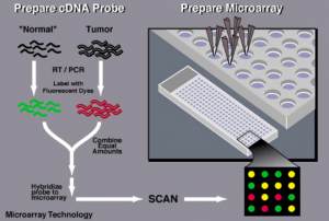 Microarrays and its applications
