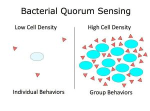 Quorum sensing in Bacteria and other Organisms