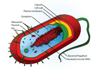 Cell Wall of Bacteria- Overview