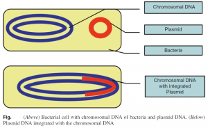 Protection of DNA Fragments