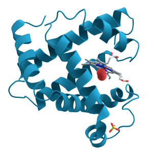 Protein- Structure, Properties and Function