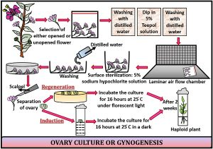 Ovary and Ovule Culture