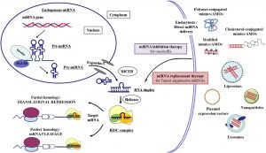 Role of MicroRNAs in cancer Therapeutics